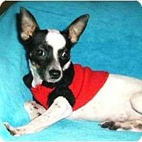 Adopt A Pet :: Reese - Mooy, AL