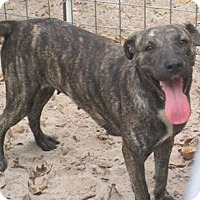 Adopt A Pet :: Pearl 2 - Floresville, TX
