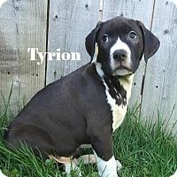 Adopt A Pet :: Tyrion - Davison, MI