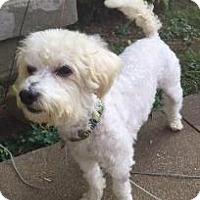 Adopt A Pet :: Sheldon - LEXINGTON, KY