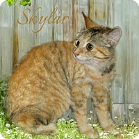 Adopt A Pet :: Skyler - McEwen, TN