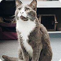 Adopt A Pet :: Miumie - San Francisco, CA
