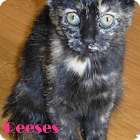 Adopt A Pet :: Reeses - Fayetteville, GA