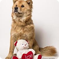 Adopt A Pet :: Mydia - Sudbury, MA