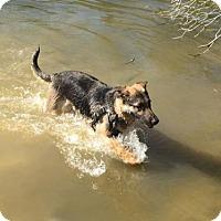 Adopt A Pet :: Dauby - Morrisville, NC