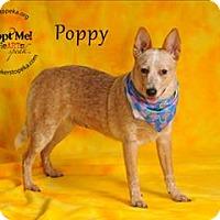 Adopt A Pet :: Poppy - Topeka, KS