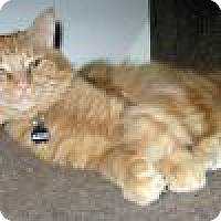 Adopt A Pet :: Marcello - Powell, OH