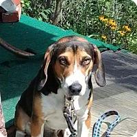 Adopt A Pet :: Boss - Tonawanda, NY