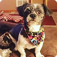 Adopt A Pet :: Grover - Eastpointe, MI