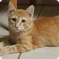 Adopt A Pet :: LLYOD - Hampton, VA