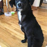 Adopt A Pet :: Faith - Sagaponack, NY
