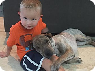 Shar Pei/Bull Terrier Mix Dog for adoption in ROSENBERG, Texas - Willow