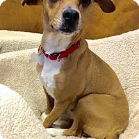 Adopt A Pet :: Lula - Big Canoe, GA