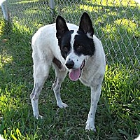 Adopt A Pet :: Zorro - Key Biscayne, FL