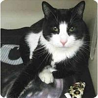 Adopt A Pet :: Butch - Mesa, AZ