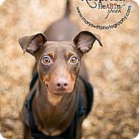 Adopt A Pet :: Danny - Myersville, MD