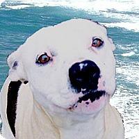 Adopt A Pet :: Dharma super URGENT - Sacramento, CA