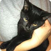 Adopt A Pet :: Coal - Chesterfield, VA