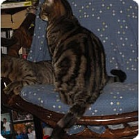 Adopt A Pet :: Hope - Davis, CA