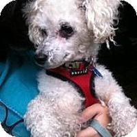 Adopt A Pet :: Naru - San Francisco, CA
