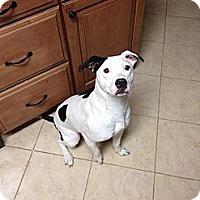 Adopt A Pet :: Anna Layne - Nashville, TN