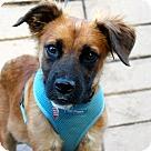 Adopt A Pet :: Alaska