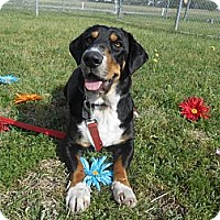 Adopt A Pet :: Bubba - Lockhart, TX
