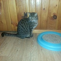Adopt A Pet :: Sarah-New Pics! - Trexlertown, PA