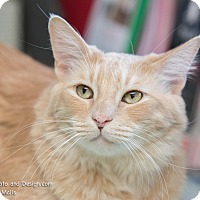 Adopt A Pet :: Tang - Fountain Hills, AZ