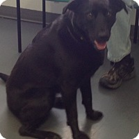 Adopt A Pet :: Remington - Meridian, ID