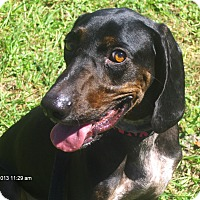 Adopt A Pet :: Atilla - Orange Park, FL
