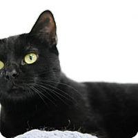 Adopt A Pet :: Boots - DFW Metroplex, TX