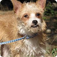 Adopt A Pet :: Hermey - Fillmore, CA