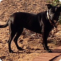 Adopt A Pet :: Emma - Rio Rancho, NM