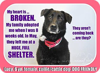 Collie Mix Dog for adoption in Wantagh, New York - Lucy