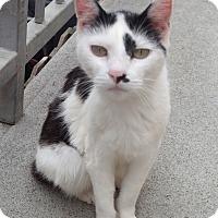 Adopt A Pet :: MISTY - San Pablo, CA