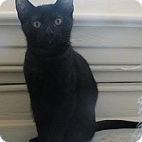 Adopt A Pet :: Wes - Anacortes, WA