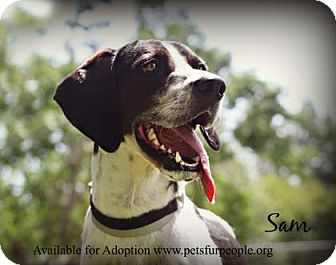 Pointer Mix Dog for adoption in Tyler, Texas - Sam