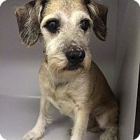 Adopt A Pet :: Emery - Manassas, VA