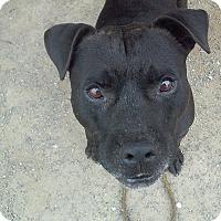 Adopt A Pet :: Mugsy - Grantville, PA