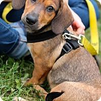 Adopt A Pet :: Wrigleyville - Mt. Prospect, IL