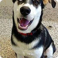 Adopt A Pet :: Ghost - Aiken, SC