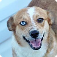 Adopt A Pet :: Chandy - Liberty Center, OH