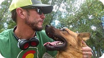 German Shepherd Dog Dog for adoption in Denver, Colorado - Theo