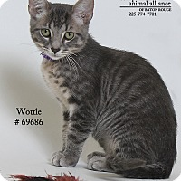 Adopt A Pet :: Wottle  (Foster Care) - Baton Rouge, LA