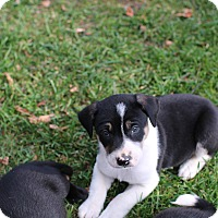 Adopt A Pet :: Krull - CHESTERFIELD, MI