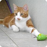 Adopt A Pet :: Riki - Stamford, CT
