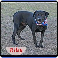 Adopt A Pet :: Riley - Hillsboro, TX