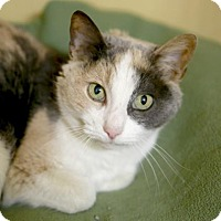 Adopt A Pet :: Posy - Kettering, OH