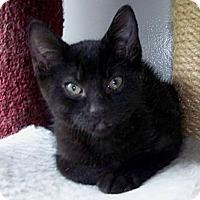 Adopt A Pet :: Luna - Victor, NY